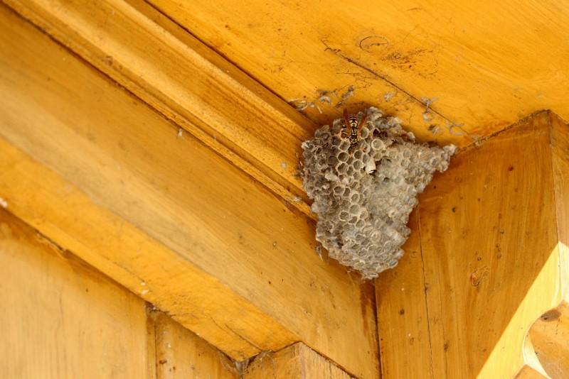 осиное гнездо под крышей дома как избавиться