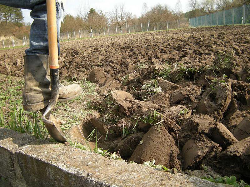 перекопка почвы осенью для борьбы с вредителями