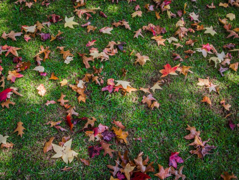 Сеем газон осенью