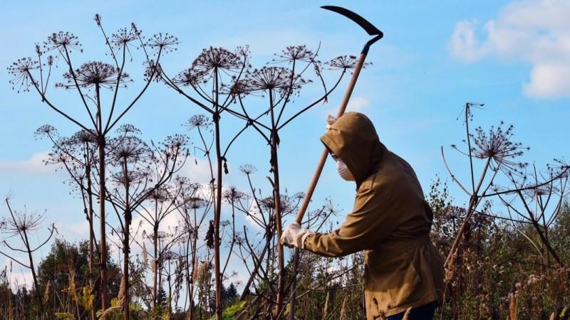 Замещение вытесняющими растениями
