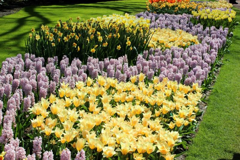 тюльпаны, нарциссы и другие луковичные